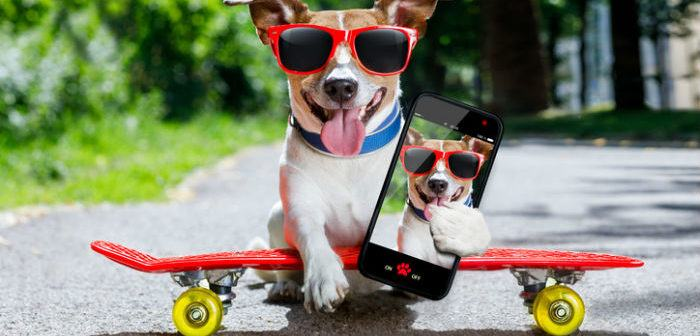 Hund schießt Selfie und wird es aufhübschen