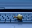 Schnecke auf einer Tastatur