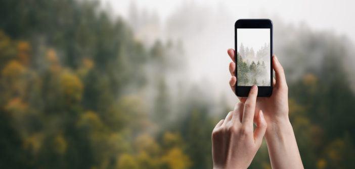 Jemand schießt mit einem iPhone ein Bild von einem Wald